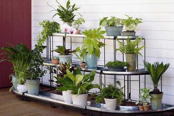 Cây trồng trong nhà không cần ánh sáng giúp thanh lọc không khí lại dễ dàng chăm sóc